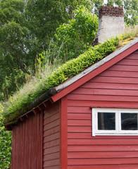 Grasdach auf Holzhaus