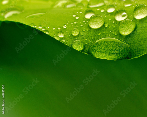 Leinwanddruck Bild Plant