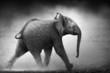 Fototapeten,elefant,baby,kalb,laufen