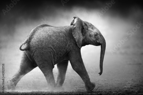 Baby Elephant running (Artistic processing)