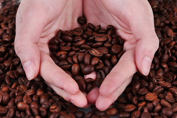 Fresh roasted coffee beans in the hands