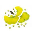 Ginkgoblätter mit Dragees