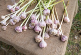 Organic Garlic at Farmers Market