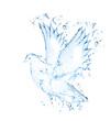 dove isolated