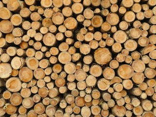 Holzstapel II