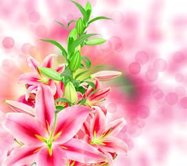 pink lilies close up