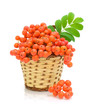 rowan berries in a basket on a white background
