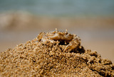 Crab on sand hillok