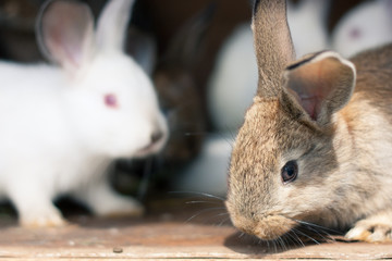 Closeup of a baby rabbit in a hutch