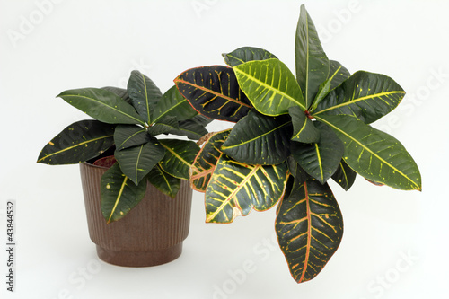 Tropical Houseplant
