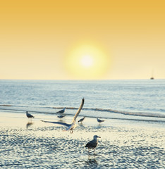 sunset time on a beach with birds - romantic view