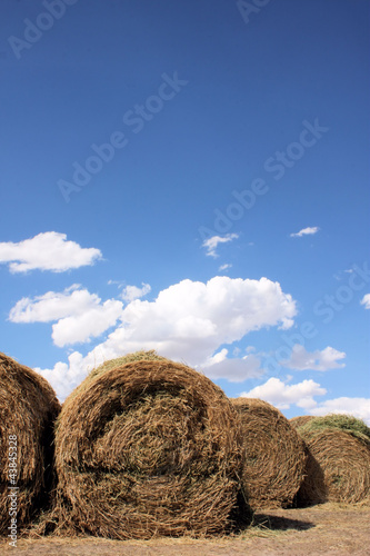 Rows of Rolled Hay