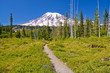 The Beautiful Trail Leading to Mt Rainier