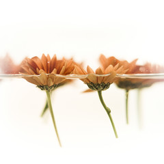Flores flotando en el agua