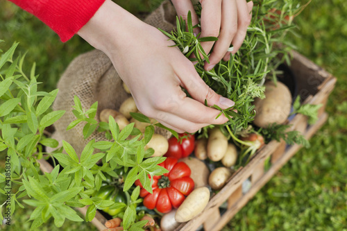 High angle view of a woman's hand putting vegetables in a crate