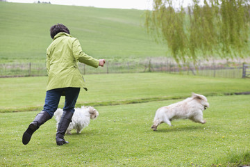 Woman playing with two dogs in a field