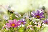Fototapety kwiaty