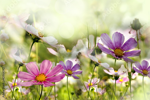Fototapety, obrazy : kwiaty