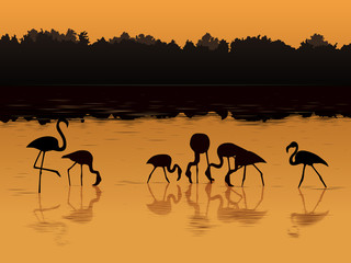 Vector flamingos at sunset in the river.