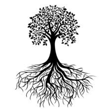 Drzewa z korzeniami