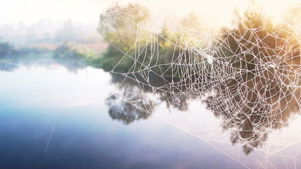 Spider web on sunrise light