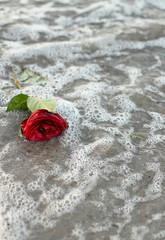 Rose zum Abschied mit Tränen