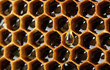 yellow beautiful honeycomb with honey, background
