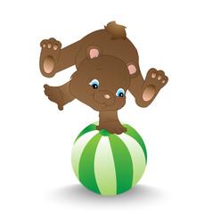 Bear balancing on a ball