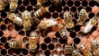 Life and reproduction of bees