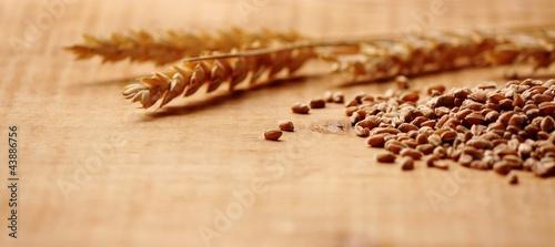 Weizenähren mit Körnern Makro - 43886756