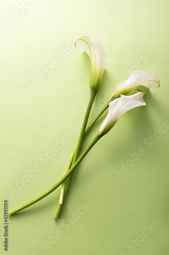 white calla flower