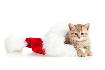 little cat in a santa claus hat on a white background