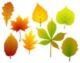 Fototapety set of fall leaves