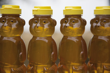 Row of Honey Bears