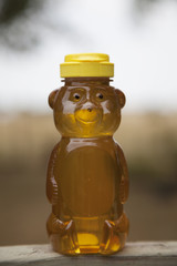 Single Honey Bear