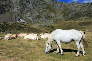 Cheval, vaches sur fond du refuge d'Ayous Vallée d'Ossau