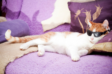 Ginger cat wearing sunglasses and relaxing on a coach