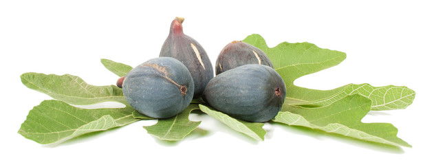 purple fig