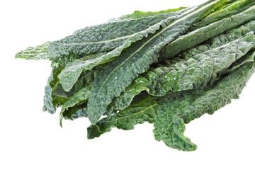 Italian (lacinato) kale