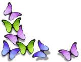Fototapeta jasny - motyl - Insekt
