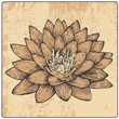 flower and design element, engraved vintage style
