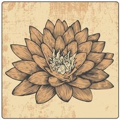flower and design element, engraved vintage style
