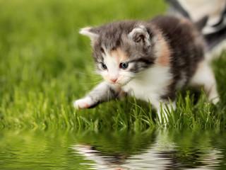 Katzenbaby mit Spiegelung
