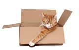 sleeping cute tomcat in removal box poster