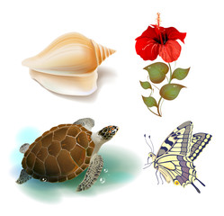 set of realistic tropical icons