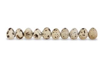 Row of Ten Quail Eggs