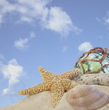 seashells on sand with glass ball with blue sky