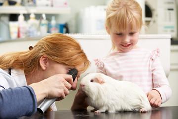 Veterinary Surgeon Examining Child's Guinea Pig In Surgery