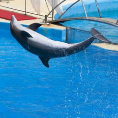 Saut du dauphin