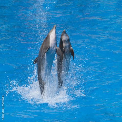 Fotobehang Dolfijnen Dauphine dansant sur l'eau